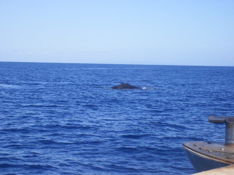 Whale_Watch(7)