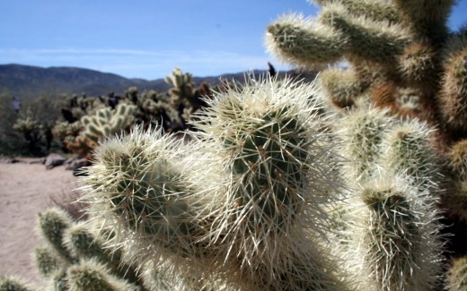 California: Joshua Tree National Park