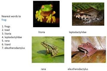 frog w2v