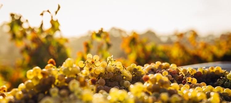 transformacion digital industria40 vinos de jerez