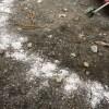 「焚火の灰」で白アリ対策をしよう!