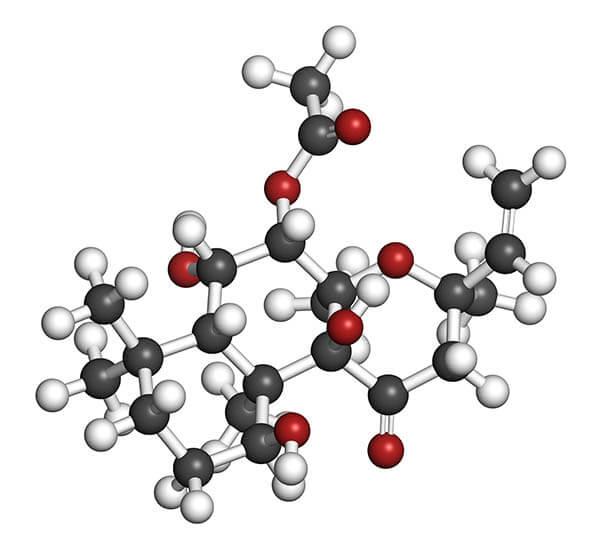 Coleus Forskolin and Testosterone