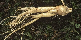 Panax Ginseng and Testosterone