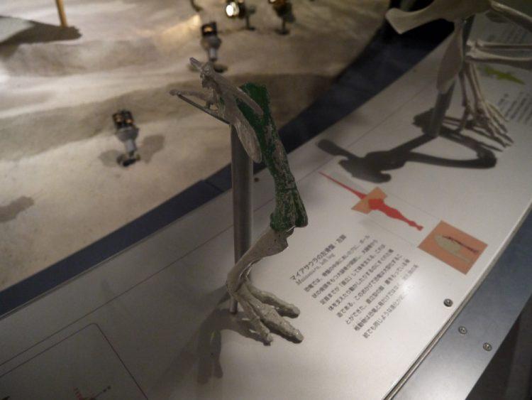 アマイアサウラの左骨盤・左脚