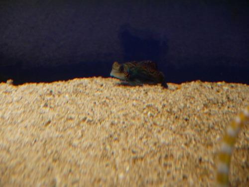 鳥羽水族館 不思議な魚