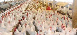 وزارة الاقتصاد تحذر أصحاب مزارع الدجاج وتشدد على الالتزام بالتسعيرة