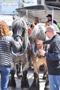 Van Steenberge's Horses