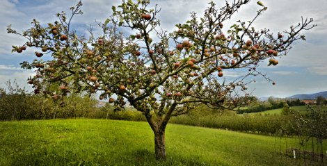 Basque Cider Orchard