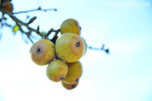 Apples at Eric Bordelet