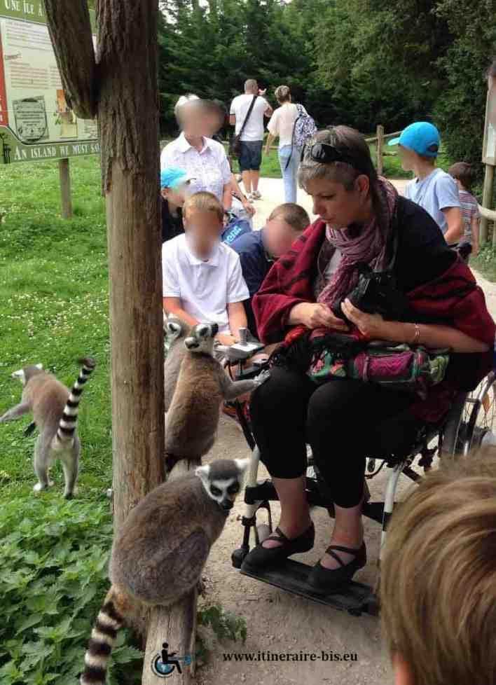 Les Lémuriens se baladent autour de nous. Ils peuvent nous toucher, mais il est formellement interdit d'en faire de même.