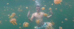 Swim with Stingless Jellyfish in Sohoton Cove