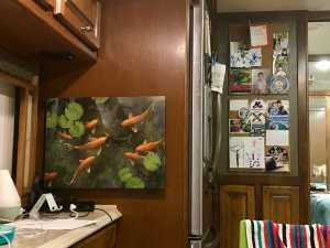 Koi Pic and cork board