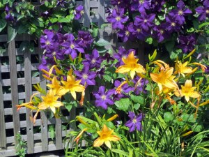 Lillies and Clematis