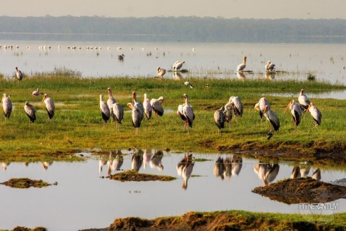 Birds in Nakuru National Park