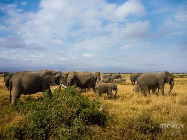 Elephants against a blue sky at Amboseli, Kenya