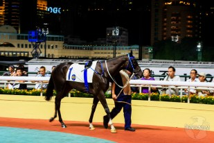 Horse parade at Hong Kong horse track