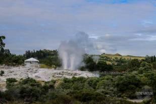 Te Puia geyser, Rotorua, New Zealand