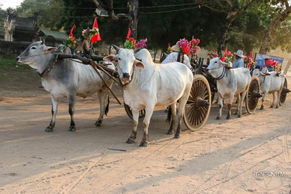 religious ceremony, myanmar