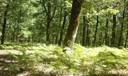 Πύργος:Προστασία του δασικού πλούτου μέσω ΕΣΠΑ