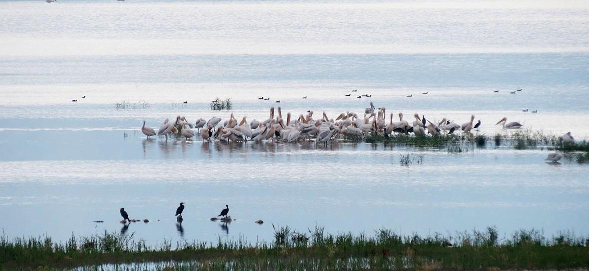 Η λίμνη Κάρλα πόλος οικοτουριστικής ανάπτυξης
