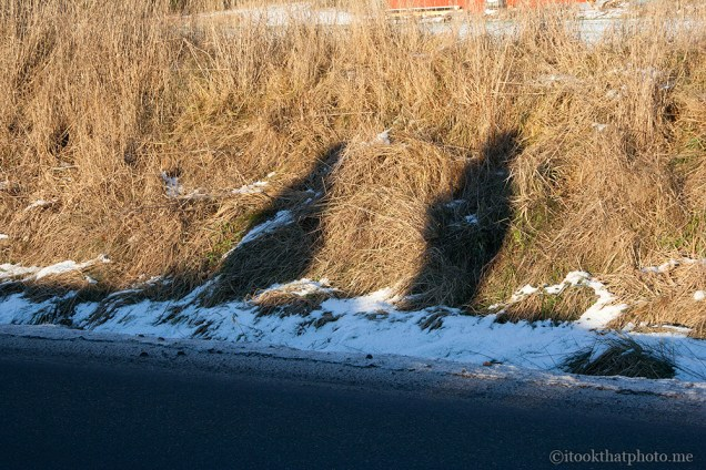 Shadows on the frozen grass