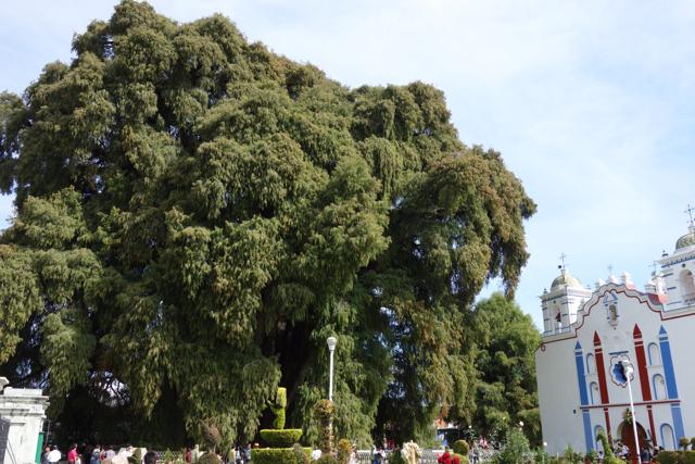 Oaxaca - 10tule