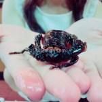 【ベトナム旅行】ゲテモノを食べる女子大生 4種類食べて美味しかったものランキング
