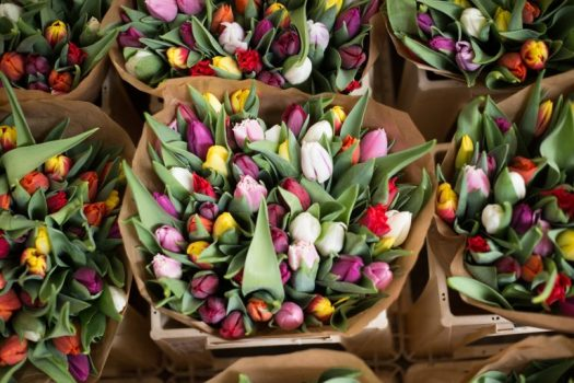 Tulips at an Amsterdam flower market
