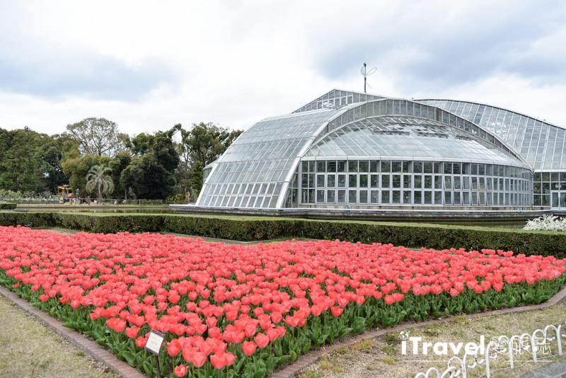《京都賞櫻景點》京都府立植物園春天繁花似錦,親子出遊野餐一起親近自然