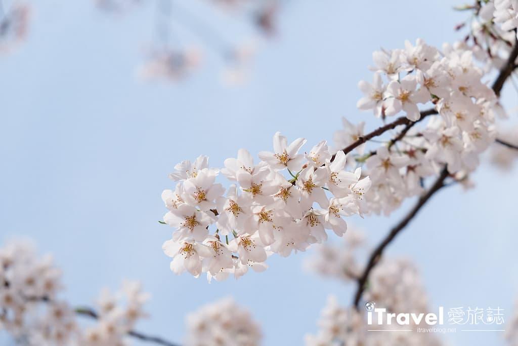 首爾景點 - 樂天塔, 石村湖, 首爾, 首爾自由行, 首爾賞櫻景點