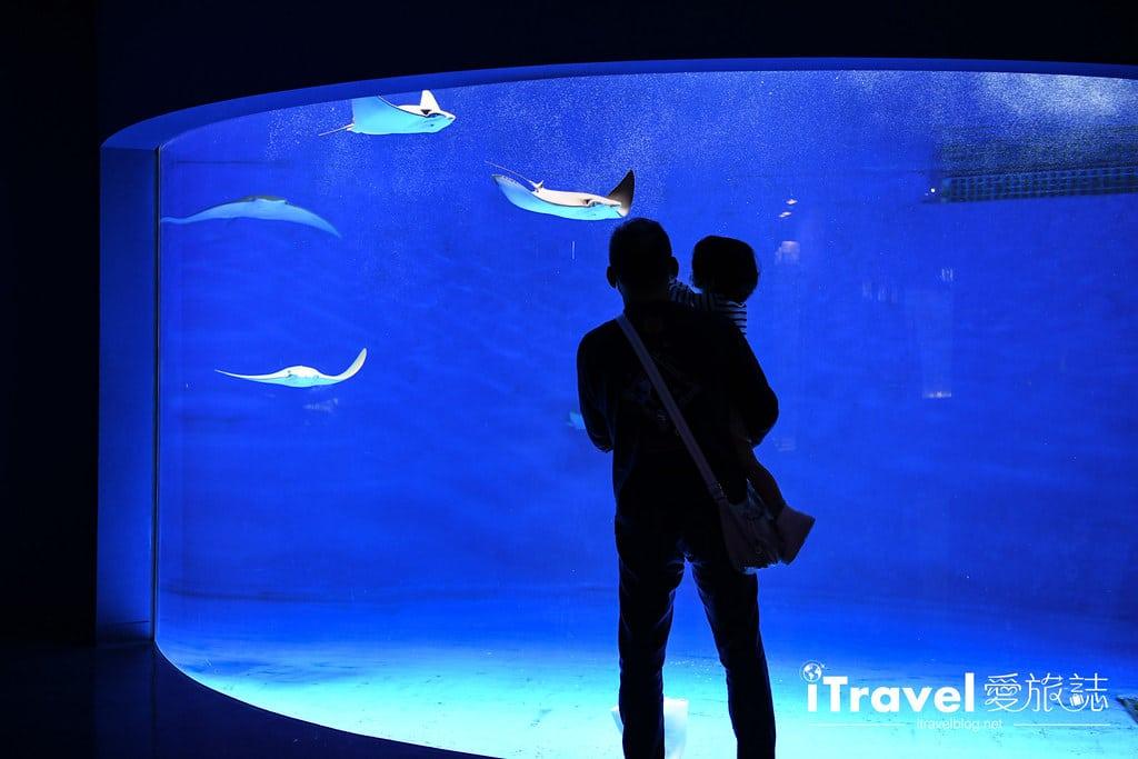 桃園八景島水族館 Xpark (29)
