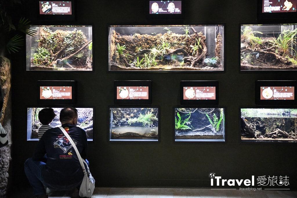 桃園八景島水族館 Xpark (39)