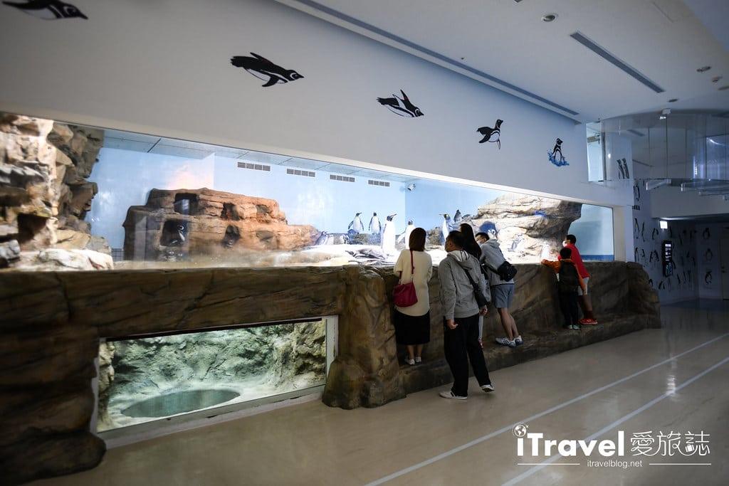 桃園八景島水族館 Xpark (87)