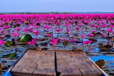 Μαγεύει η λίμνη των κόκκινων λωτών στην Ταϊλάνδη - iTravelling