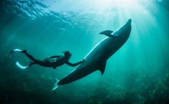 Εξερευνούμε την άγρια φύση των ωκεανών με την κάμερα της Nikon και τον George Karbus - itravelling.gr
