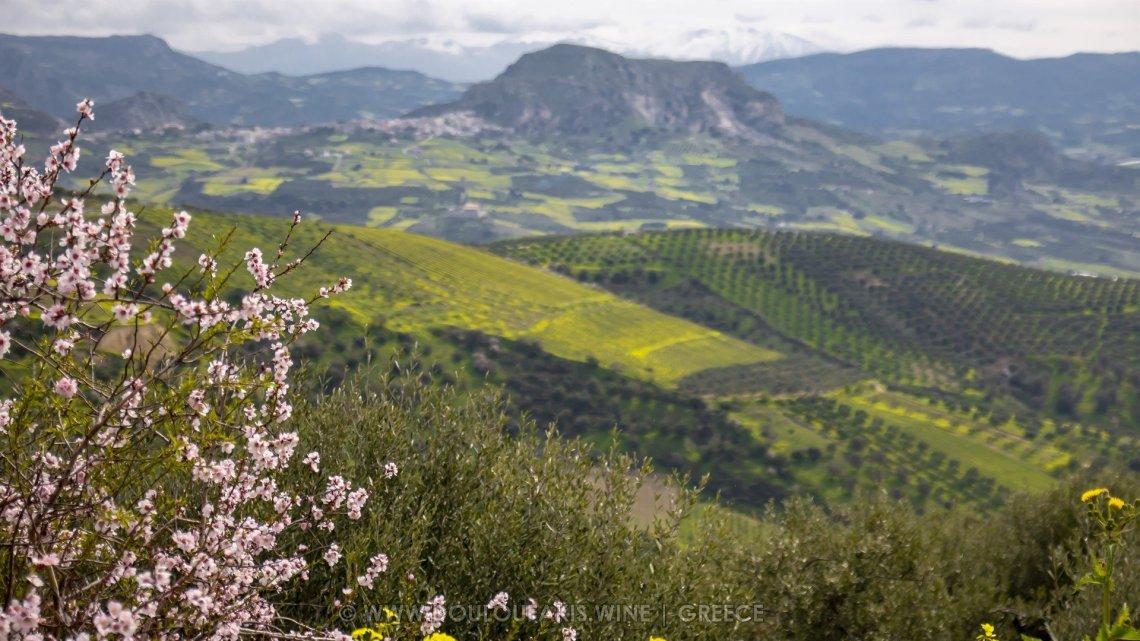 Wine & Travel || Ταξίδι αρωμάτων & γεύσεων στο Οινοποιείο Δουλουφάκη - itravelling.gr