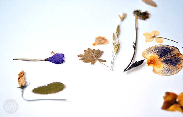 I Try DIY | Take a Closer Look at these Pressed Flowers Pieces