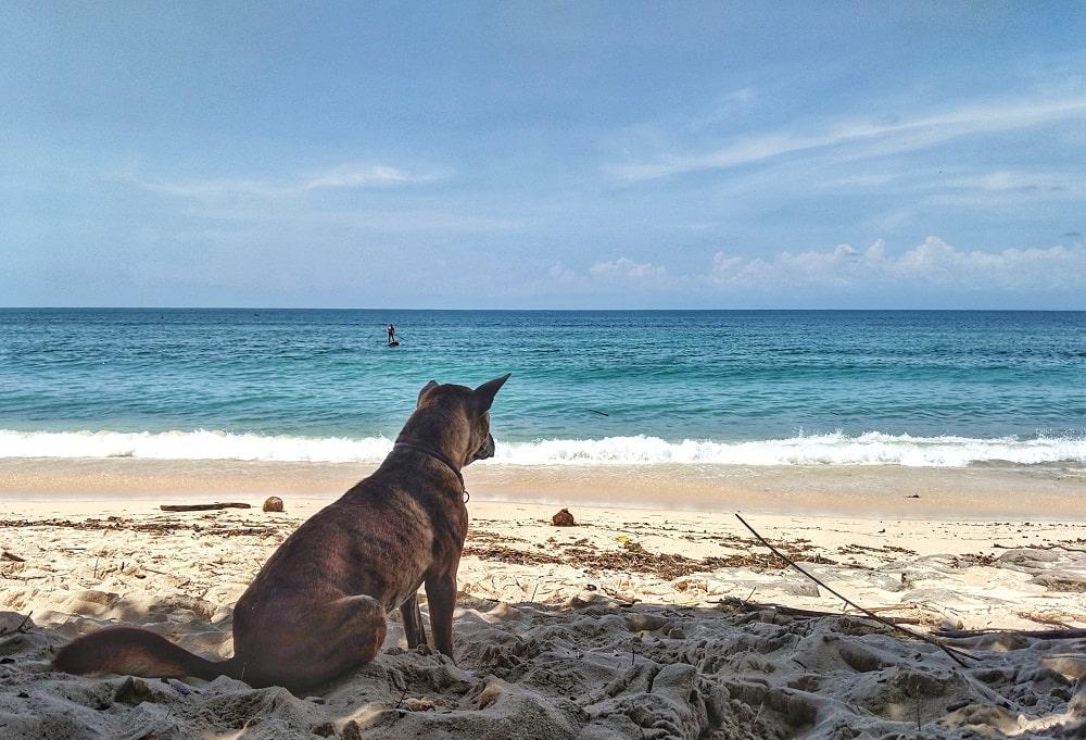 Bali - Insel der Gegensätze - It's a travel thing - Blog -Straßenhund am Strand