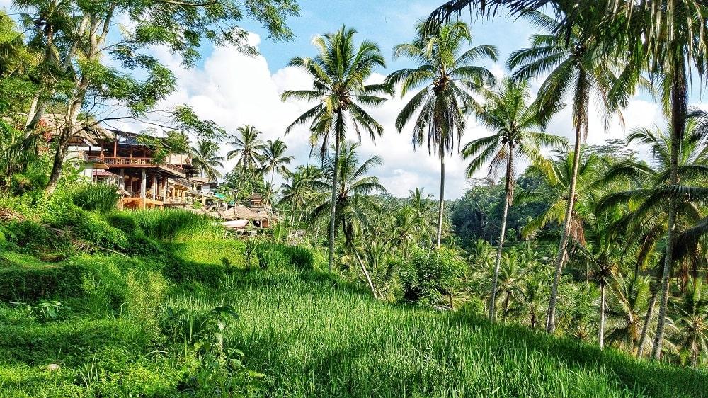 Bali - Insel der Gegensätze - It's a travel thing - Blog -grüne Reisterassen