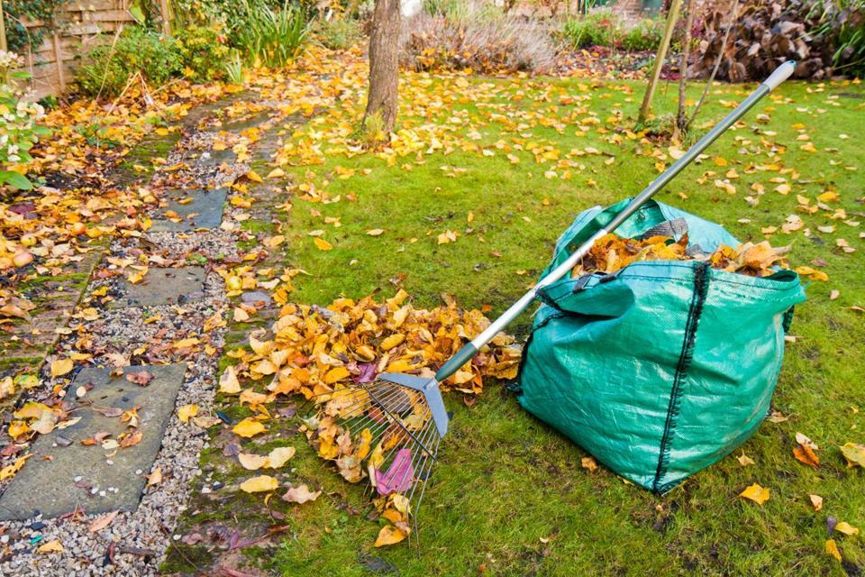 What Happens Fallen Leaves