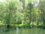 the pond in early summer