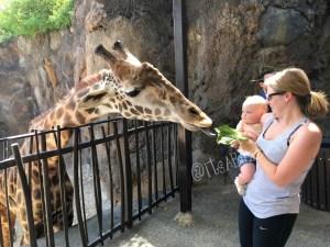 giraffe ava