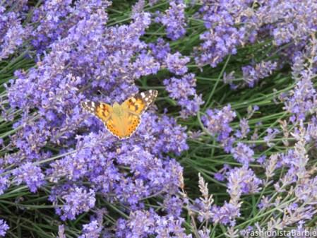 lavender-farm-very-dress-1