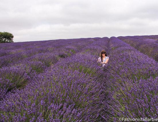 lavender-farm-very-dress-19
