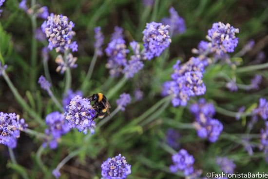 lavender-farm-very-dress-31