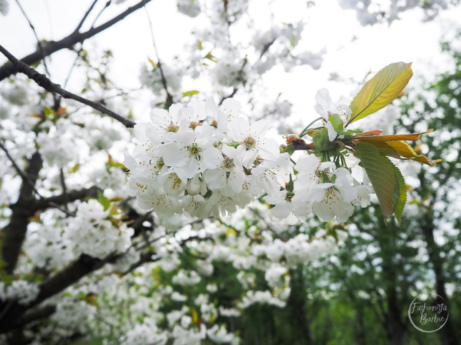 Brodgale Collections, Blossom, Blossom Season, Kent Blogger, Visit Kent,