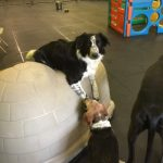 doggy daycare, greenfield, milwaukee