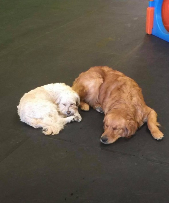 doggy daycare, Greenfield, pet daycare