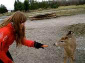 Feeding Deer at Omega Park