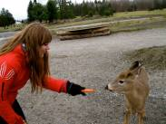 Feeding Deer at Omega Park